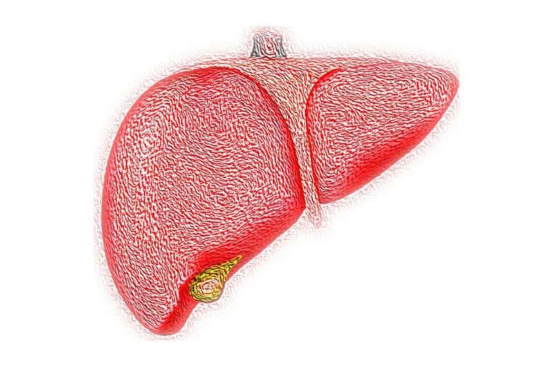 يمكن أن تكون الخلية المجهدة في الكبد خبرًا سيئًا لجيرانها