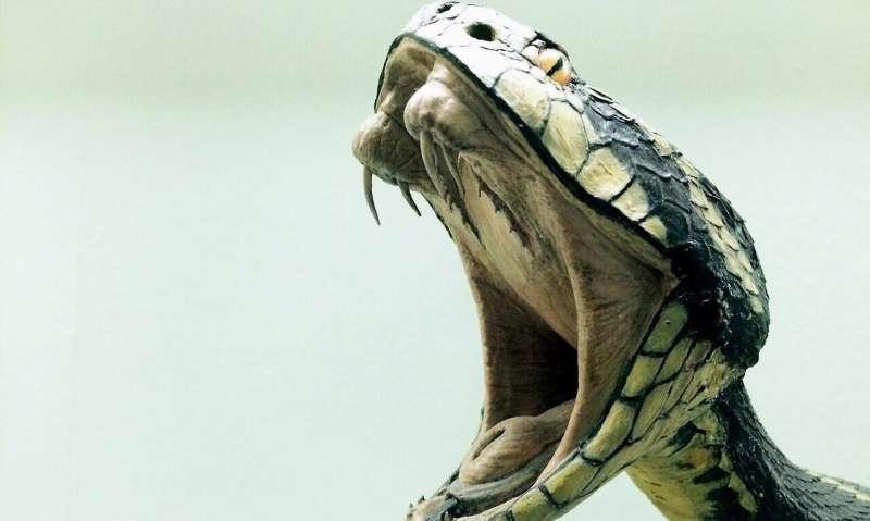 حملة ذو تَكلفة منخفِضة عن لدغات الأفاعي تٌنقذ العديد من الأرواح في جنوب الهند !